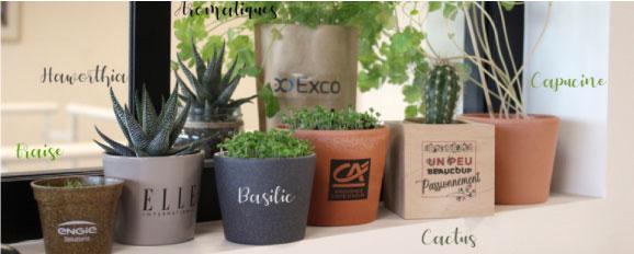 Plante Personnalisées Pour Cadeau Entreprise Fin D'année