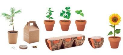 Plantes Personnalisés Pour Cadeau Client